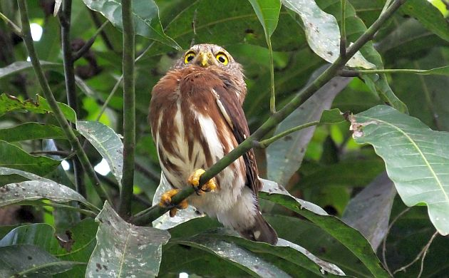 Birding in Costa Rica Off the Beaten Track at Hitoy Cerere