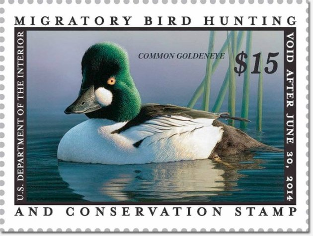 Common Goldeneye Duck Stamp