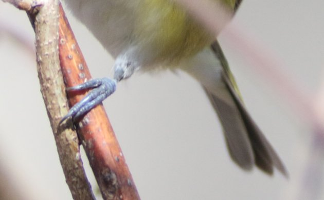 Diabolical Early Spring Migrants Quiz 3
