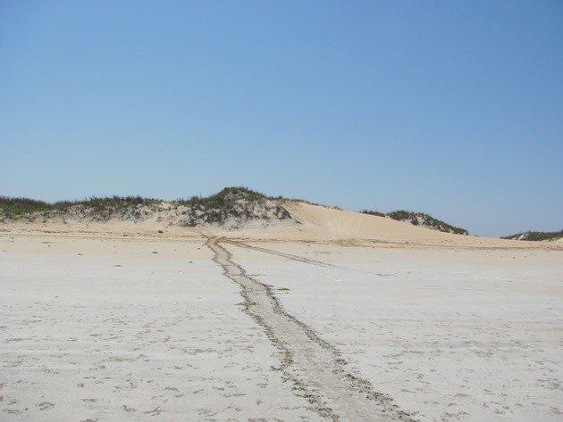 Flatback Turtle tracks
