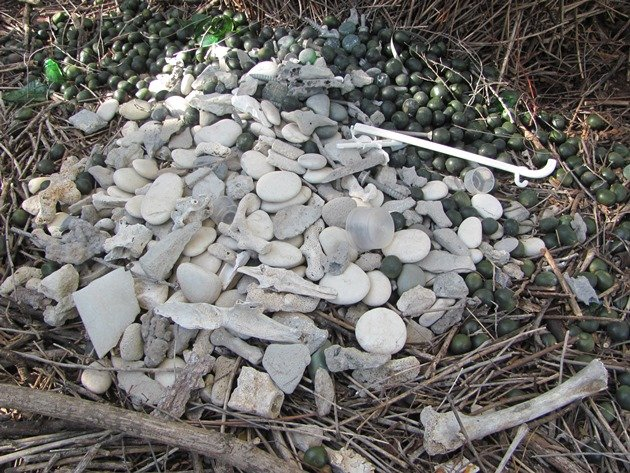 Great Bowerbird bower (11)