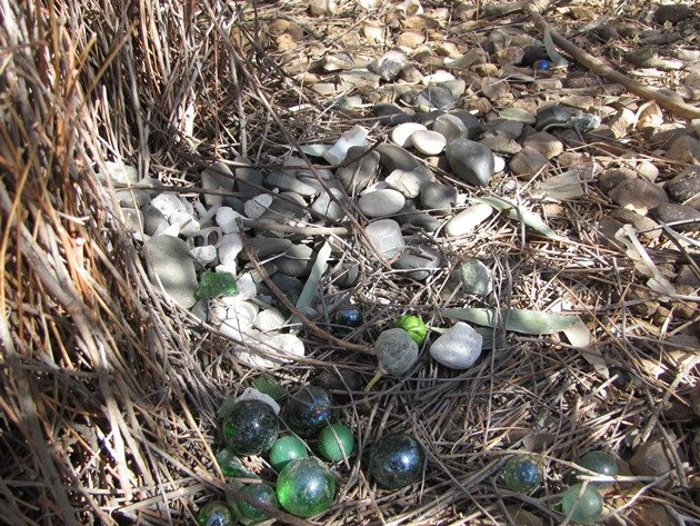 Great Bowerbird treasures (3)