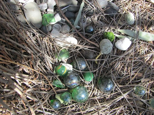 Great Bowerbird treasures