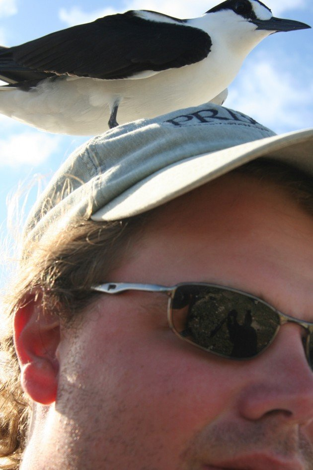 head tern