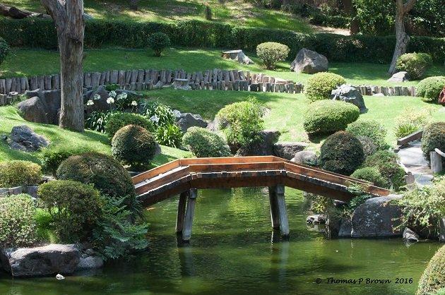 Jap Garden (2)
