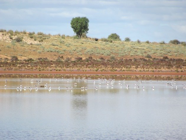 Lake Miranda (2)