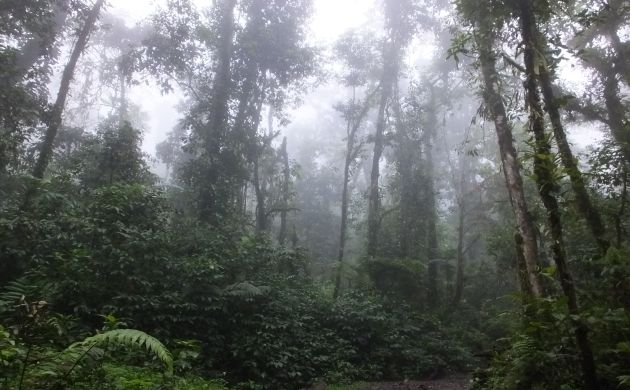 Misty rainforest
