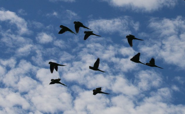 Where Are You Birding This Third Weekend of September 2014?