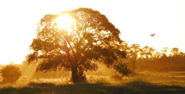 Pantanal Dawn