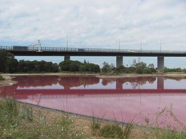 Pink Lake Westgate Park