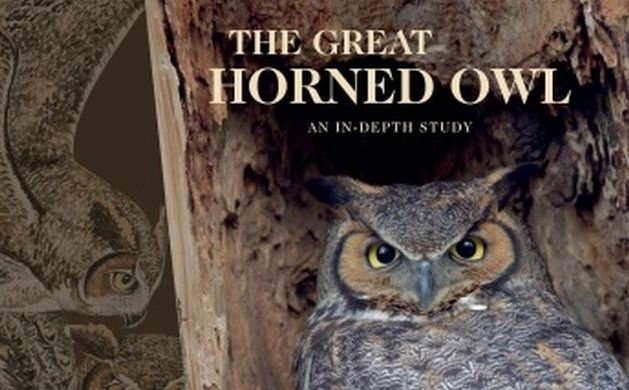 The Great Horned Owl: An In-Depth Study by Scott Rashid
