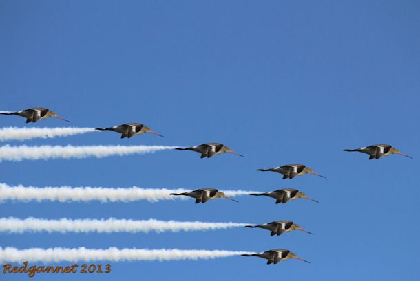 Red Arrows 04