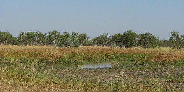 Birding a bush track