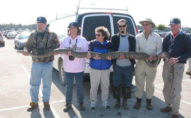 caught python
