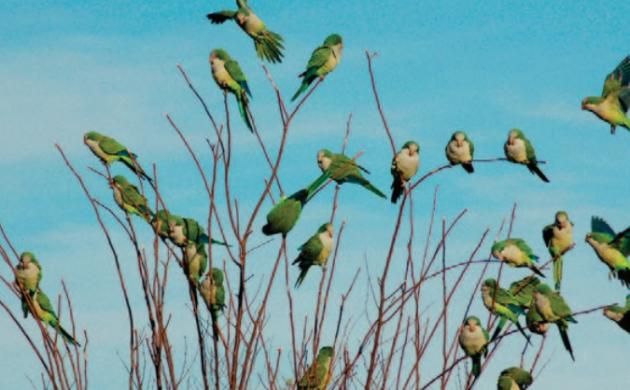 How smart are parrots?