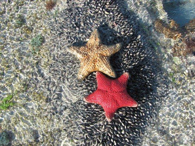 Star Fish (2)