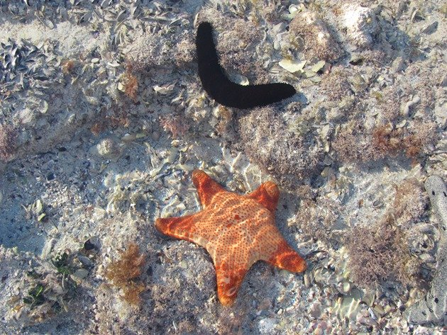 Starfish & Sea Cucumber