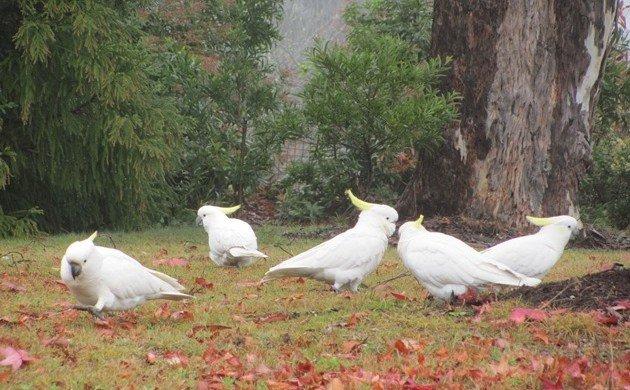 Big White Bird survey