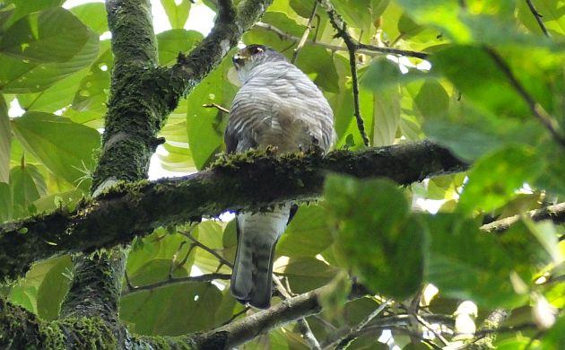 Tiny Hawk 1