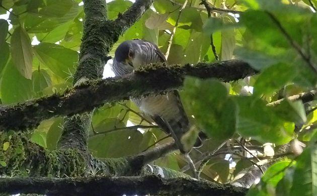 Tiny Hawk 2