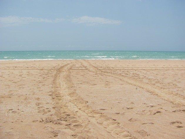 Turtle tracks (2)