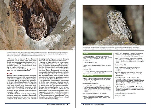 Whiskered Screech-Owl Notes