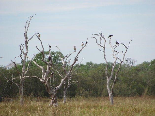 Wetland bird roost