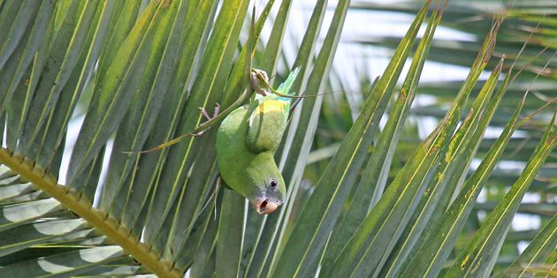 South Florida Specialties Birding