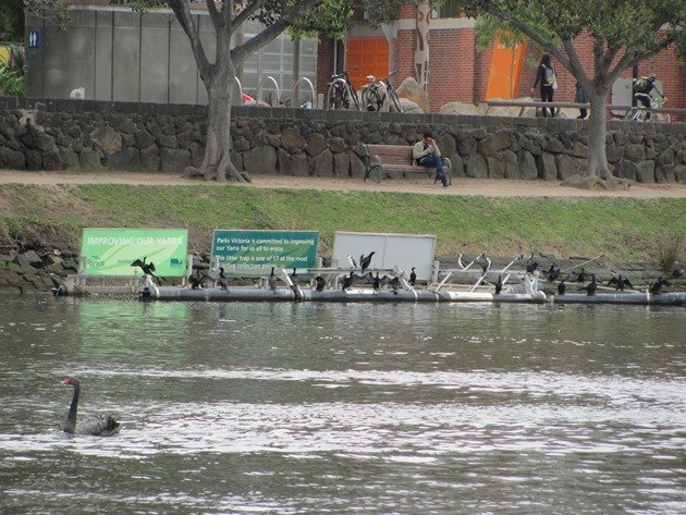 Yarra River rubbish barge