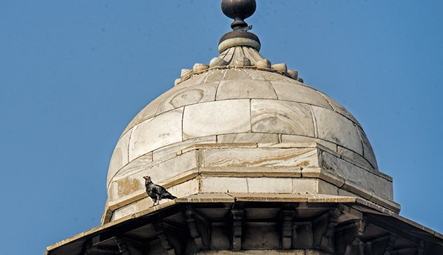 agra.black kite on mosque dome.630