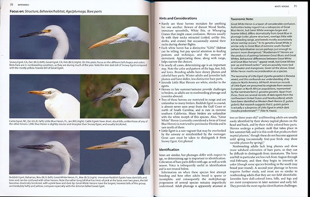 betterbirding.egrets.focus.630