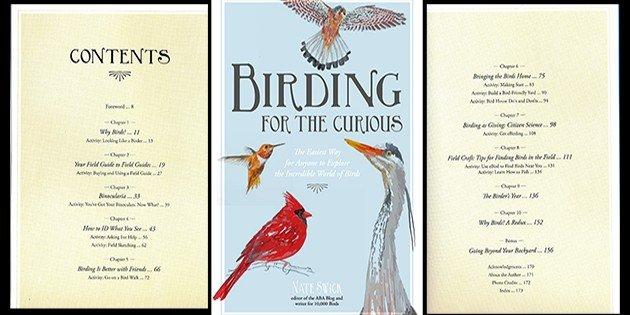 Birding for the Curious: A Book Review