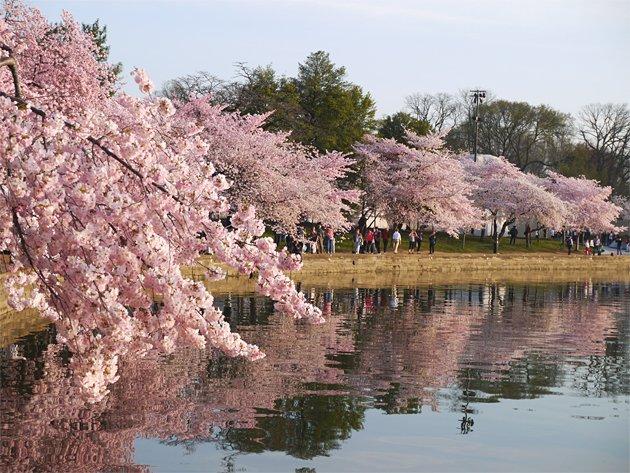 blossomsatthemall