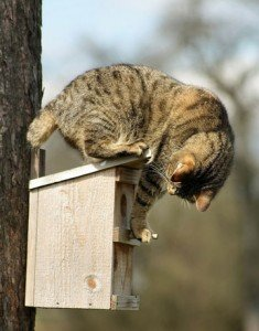cat-on-feeder-lg