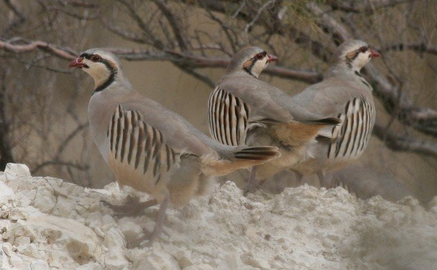 New Research Examines How, and Where, Birds Fly