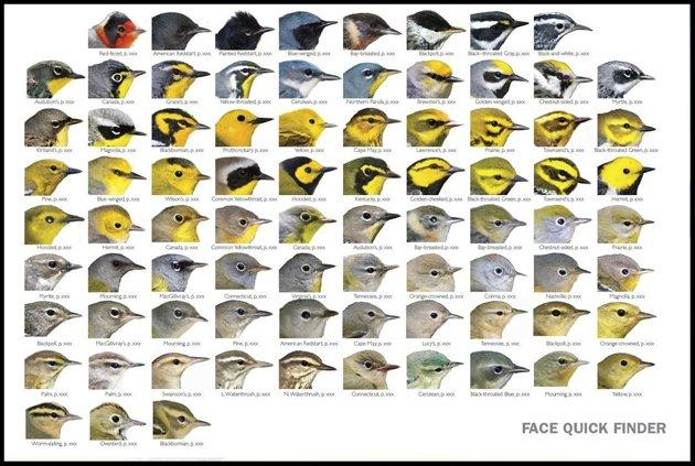 warbler guide facefinder
