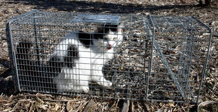 Outdoor/Feral Cat Problem? Call the SWAT Team