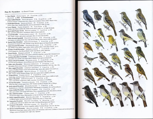 ffrench.flycatchers