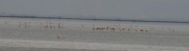 flamingo balz 10