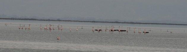 flamingo balz 3