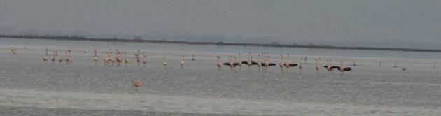 flamingo balz 4