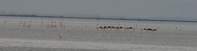 flamingo balz 5