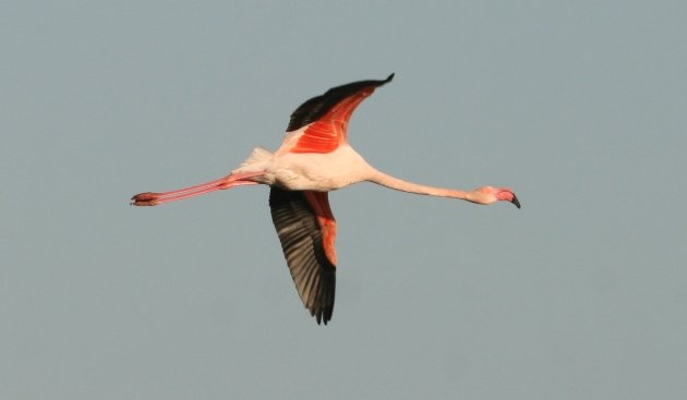 flamingo flight 2