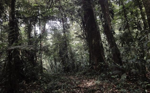 A Few Ups and Downs of Forest Birding in Costa Rica