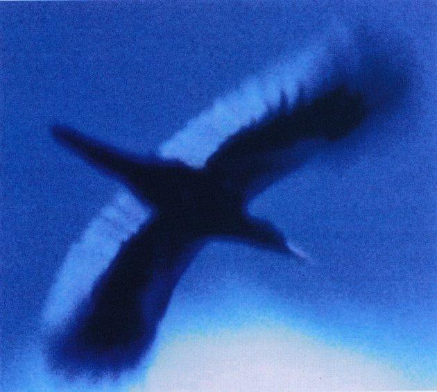 fuller.imperialwoodpecker.630
