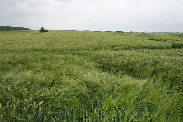 greate rhea habitat