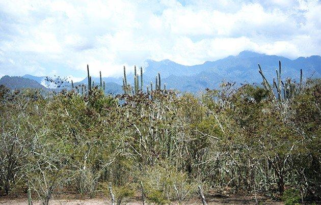 Rio Aguan Valley Honduras