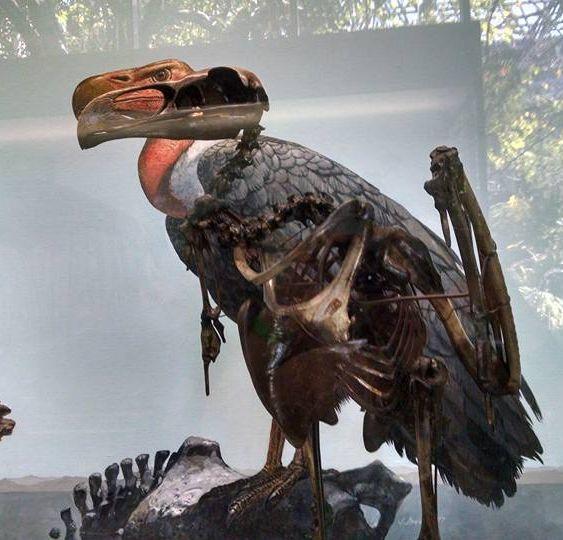 la brea condor fossil