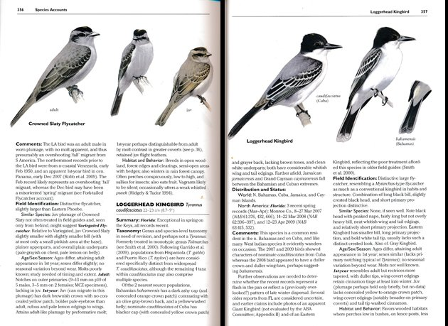 loggerheadkingbird