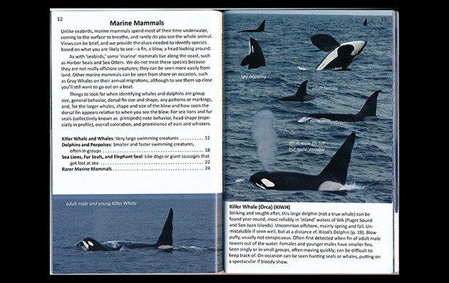 marine mammals.ed